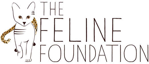 felinefoundation